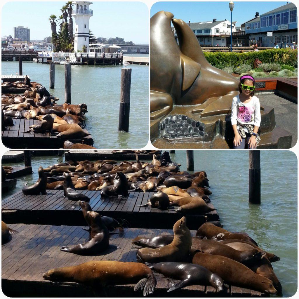 Pier 39-Deniz Aslanları/Sea Lions